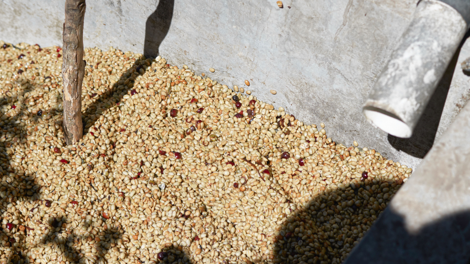 Cafe Imports sells and ships green coffee around the globe to our international offices and international warehouses.